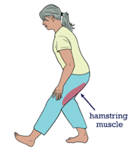 Image of where the hamstring muscle is on the body