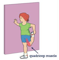 Image of where the quadricep muscle is on the body